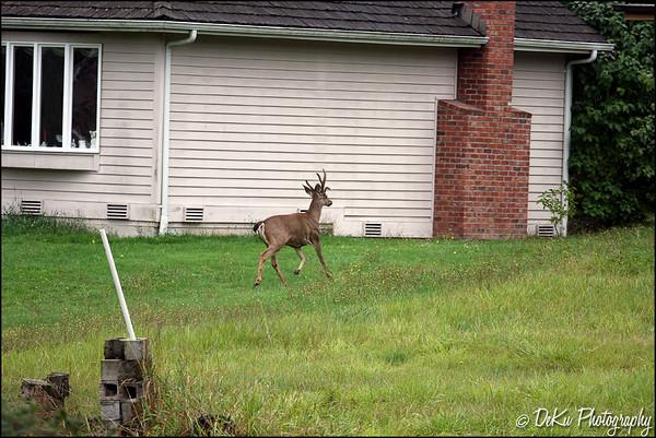 Deer0910(web)_0016