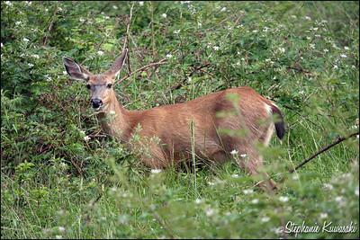 Deer0612(web)_0026