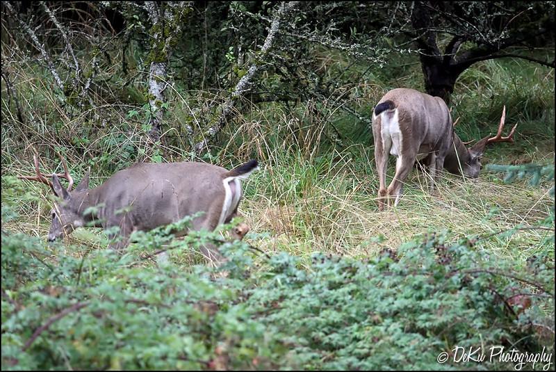 Deer0910(web)_0001