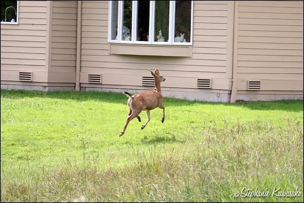 Deer0703(web)_0004