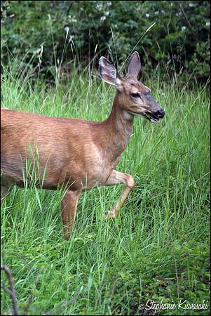 Deer0612(web)_0015