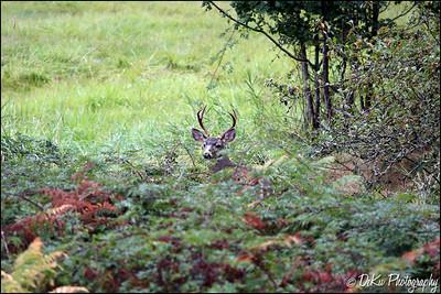 Deer0910(web)_0004