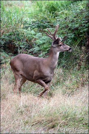 Deer0910(web)_0010