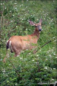 Deer0612(web)_0022