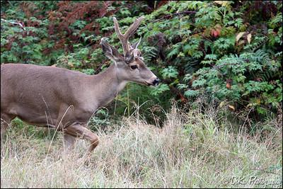 Deer0910(web)_0011