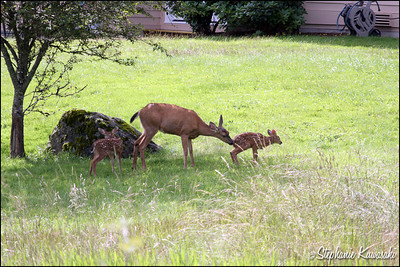 Deer0703(web)_0001