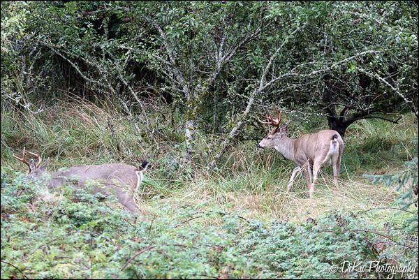 Deer0910(web)_0002