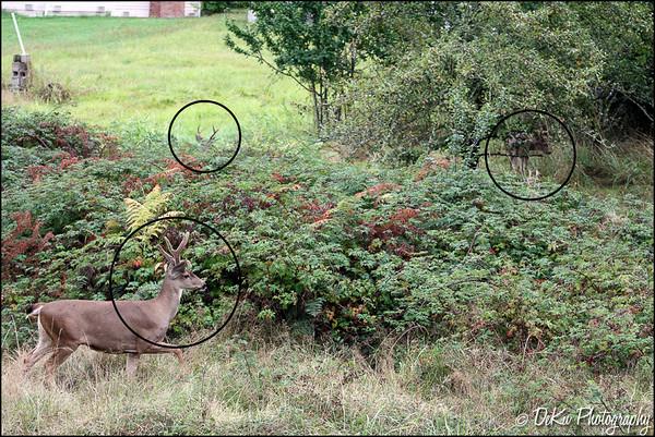Deer0910(web)_0014