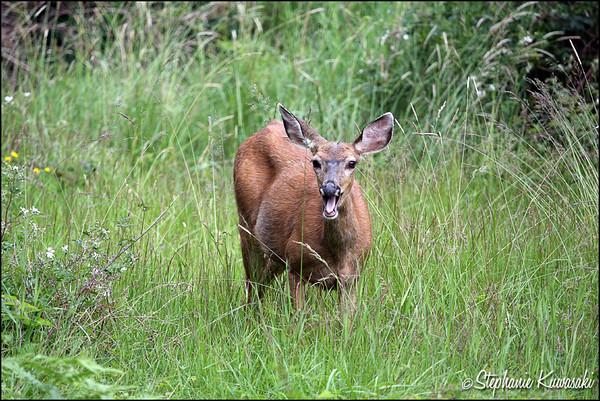 Deer0612(web)_0008