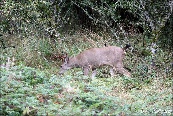 Deer0910(web)_0003