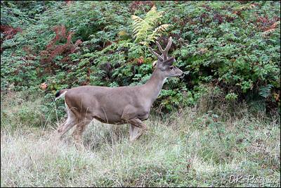 Deer0910(web)_0013
