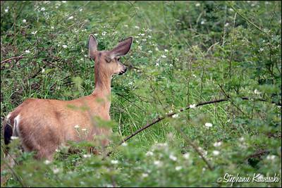 Deer0612(web)_0020