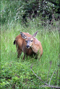 Deer0612(web)_0010