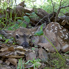 April 18, 2016<br /> This fawn is waiting for its mother to return.