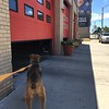 Bailey's favorite fire house