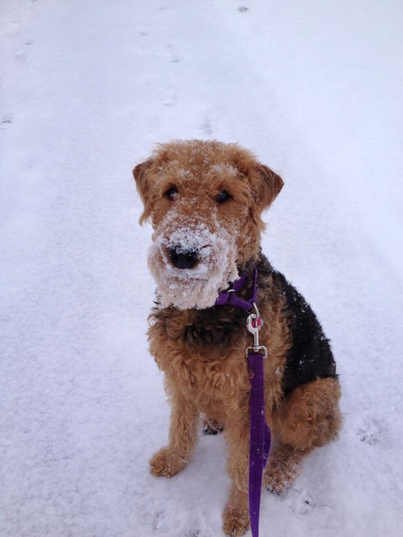 Snowbeard - Feb 2013