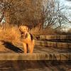 Prairie Wolf Dog Park