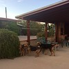 Tucson Airedale Ranch<br /> Rowdy, Bailey and Edison