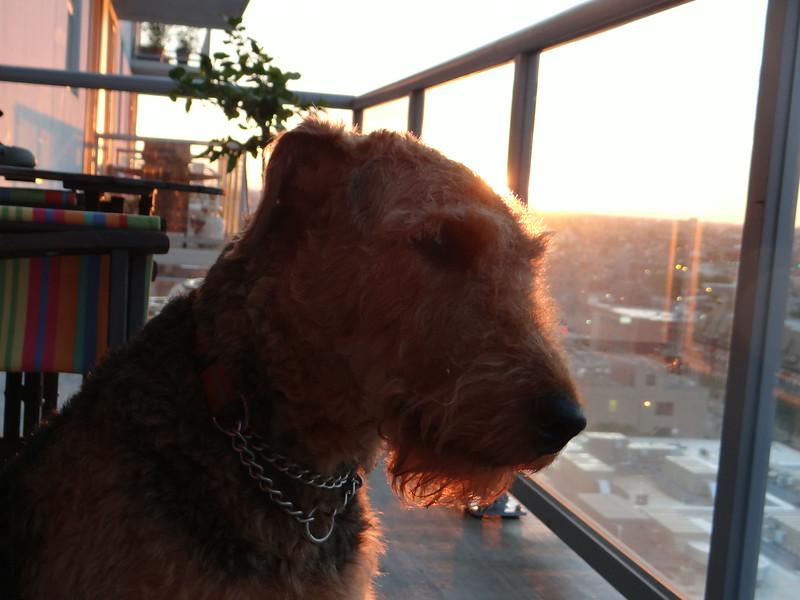 Bailey Red Beard