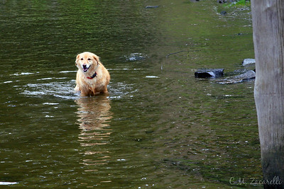 In the CT. River, look at the smile. this made him so happy!