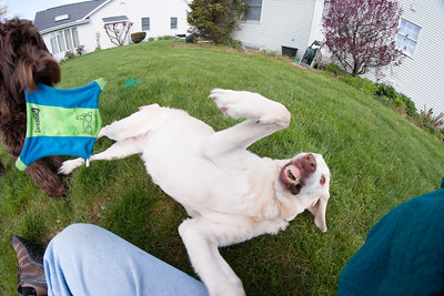 dogs and fisheye-05126