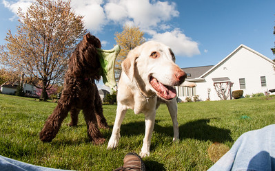 dogs and fisheye-05021