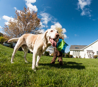 dogs and fisheye-05083