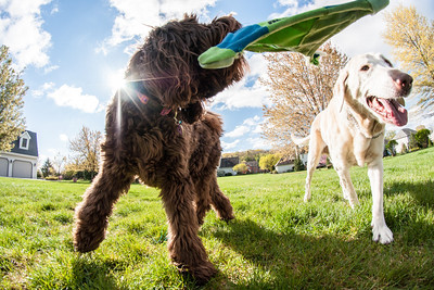 dogs and fisheye-05183