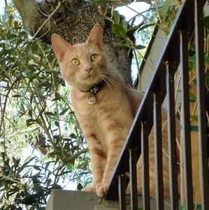 Hobbes the original balcony cat.