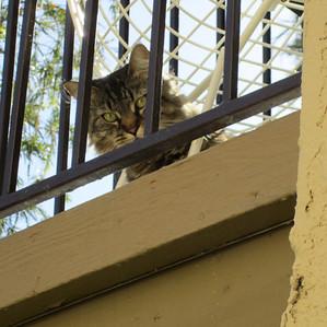 Another Balcony Cat 2011 nominee.