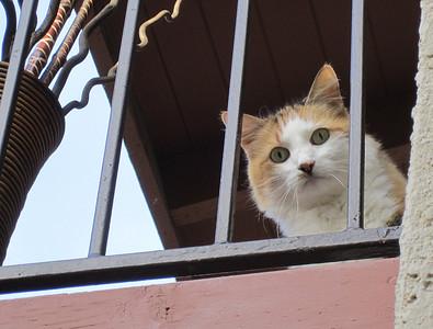 Balcony Cat 2011