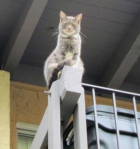 Rescued cat 1 week later. Still needs bird rehab.
