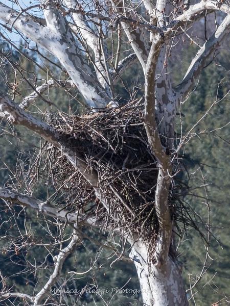 Eagle Nest 3 Feb 2018-2520