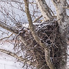 Eagle Nest 18 Feb 2018-3608