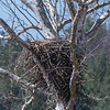 Eagle Nest 26 Mar 2018-3768