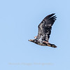 Eagles Conowingo Dam 14 Apr 2018-7683