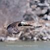 Eagles Conowingo Dam 14 Apr 2018-7787
