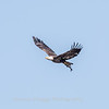 Eagles Conowingo Dam 14 Apr 2018-7636