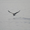 Eagle Duck Hunting_02_14_08_004