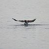 Eagle Duck Hunting_02_14_08_003