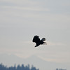 Eagle Duck Hunting_02_14_08_001