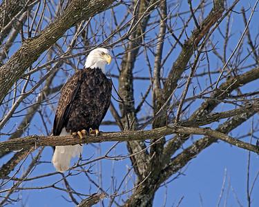 Meet Mr. Eagle