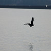 Eagle Duck Hunting_02_14_08_007