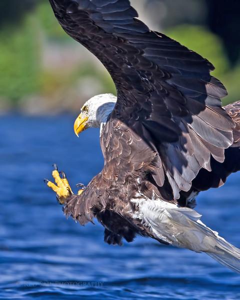Eagle Action..
