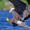 Eagle Action..