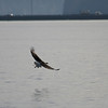 Eagle Duck Hunting_02_14_08_005