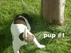 5 wks pup-1 DSCN2317 text