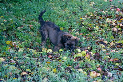 Basil and THE APPLES