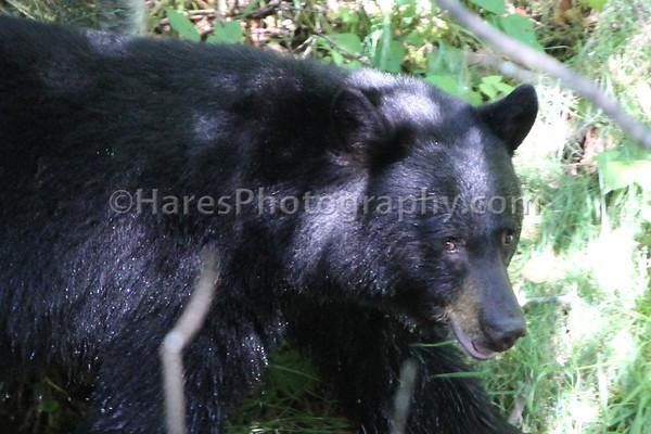 Bear- Kokanee Creek
