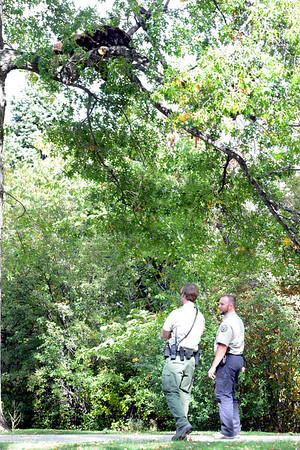 """City of Boulder Open Space and Mountains Park rangers keep an eye on a bear and her cub on Wednesday.<br /> A mother black bear and her cub spent much of the day in a tree in Chautauqua Park on October, 3, 2012. For more photos and a video, go to  <a href=""""http://www.dailycamera.com"""">http://www.dailycamera.com</a>.<br /> Cliff Grassmick  / October 3, 2012"""